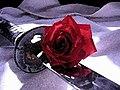 Akban-rose.jpg