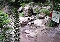 Algerie Blida Chiffa Source de Singes (46).jpg