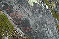 Alta kalliopiirros1.jpg