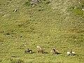 Altai0155 (93590544).jpg