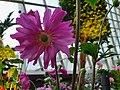 Amazing big pink flower.jpg