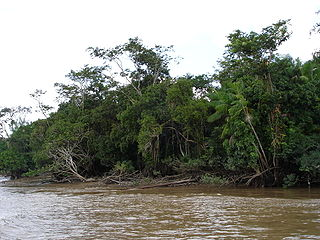 Along Amazon