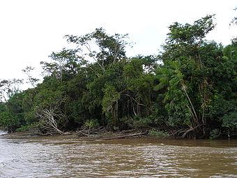 Les bords du fleuve Amazone dans l'état brésilien du Pará