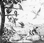 1667 illustration with three Guadeloupe amazons in the tree at left