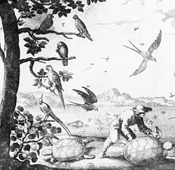 A sepia line drawing showing five birds sitting on a tree, a black bird in flight and a tortoise or turtle on the ground underneath.