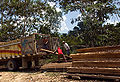 Amazonas-Wood-production.jpg