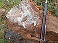 Ammonite fossil Hallstatt.JPG
