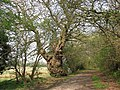 An ancient lane - geograph.org.uk - 1253966.jpg
