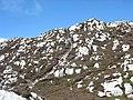 An ascending path - geograph.org.uk - 899352.jpg