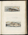 Animal drawings collected by Felix Platter, p1 - (15).jpg