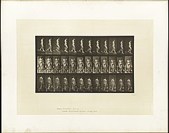 Animal locomotion. Plate 121 (Boston Public Library).jpg