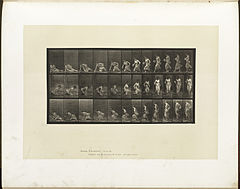 Animal locomotion. Plate 248 (Boston Public Library).jpg