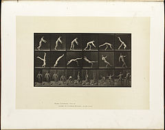 Animal locomotion. Plate 365 (Boston Public Library).jpg