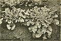 Annales du Jardin botanique de Buitenzorg (18222836379).jpg