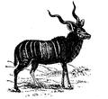 Antelope 2.png
