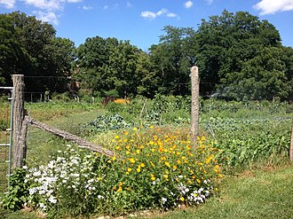 Antioch College - Entrance to Antioch Farm growing area, high summer.