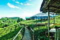 Antu tea garden 011.jpg