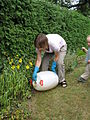Applying the diluted urine to the soil next to the bushes (3867991548).jpg
