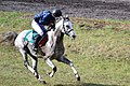 Arabian horse near finish line (6249851642).jpg