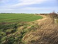 Arable field and set aside strip - geograph.org.uk - 312637.jpg