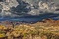 Arizona cacti (Unsplash).jpg