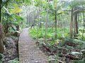 Au-Q-Eprapah Koala Glade trail.jpg