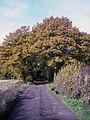 Autumn 5 (3009688143).jpg