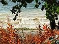 Autumn colours in Hambleton Wood - geograph.org.uk - 1002112.jpg