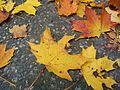 Autumn in Great Poland (2).jpg
