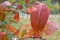 Autumn in Puszcza Notecka, Babliniec (9).JPG