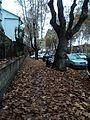 Autumn in Rome2.jpg