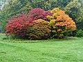 Autumn in the Rain (1), Batsford Arboretum - geograph.org.uk - 1538984.jpg