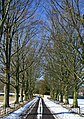 Avenue of trees at Asthall - geograph.org.uk - 1155090.jpg