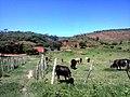 Bachio dos Bernardos - panoramio (3).jpg