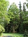 Bad-homburg-kurpark-flora-0082.jpg