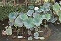 Bambouseraie de Prafrance 20100904 096.jpg