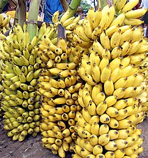 Banana bunch India Tamil word 15.jpg