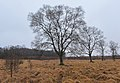 Bare trees in the High Fens (DSCF6583).jpg