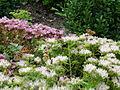 Barva nerozhoduje - Humpolecko - Farní zahrada.JPG
