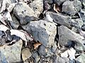 Basalt with gas bubbles, Spiers, Beith.JPG