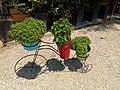 Basil plants 01.jpg