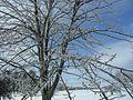 Baum in Eis 02.jpg