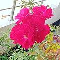 Beauty of flora.jpg