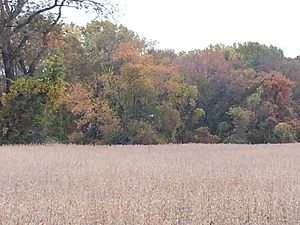 Beaver Valley, Delaware and Pennsylvania - Fall foliage is the backdrop for a tawny field in Beaver Valley.