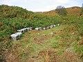 Beehives near Blawearie - geograph.org.uk - 1506603.jpg