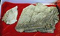 Beipiaosaurus-Paleozoological Museum of China.jpg
