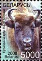 Belarus stamp 2008 5000R European Bisons.jpg