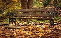 Bench and leaves - panoramio.jpg