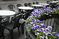 Berlin- Nikolaiviertel quarter bar table rows and flowerpots - 2840.jpg