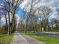 Berlin avenue trees.jpg